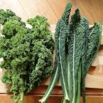 Feuilles de deux variétés de Kale