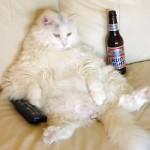 chat-paresseux