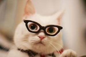 En cette période de rentrée, nombreux sont les enfants qui ont reçu une  nouvelle paire de lunettes. C était pour ma part un incontournable avant  chaque ... 7910b73ca114