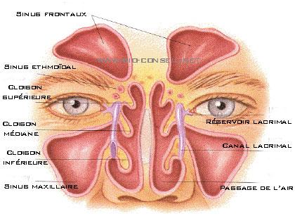 Sinus et yeux