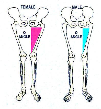 hanches et femur homme femme