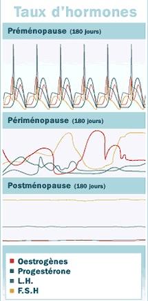 Taux d'hormones durant la périménopause